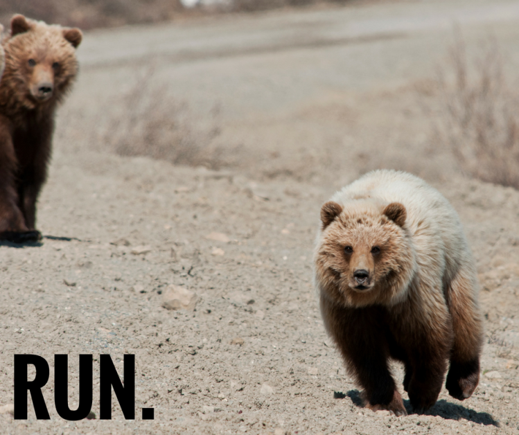 run-grizzly-bears